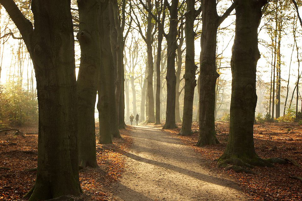 Through the woods in the autumn on the Veluwe (NL)